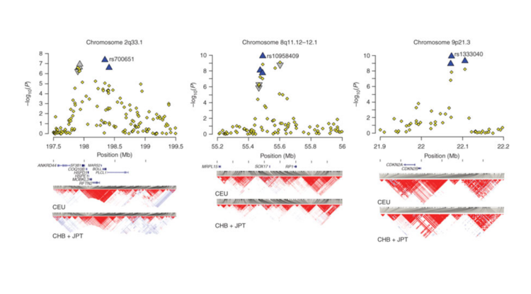 Susceptibility loci for intracranial aneurysm in european and japanese populations