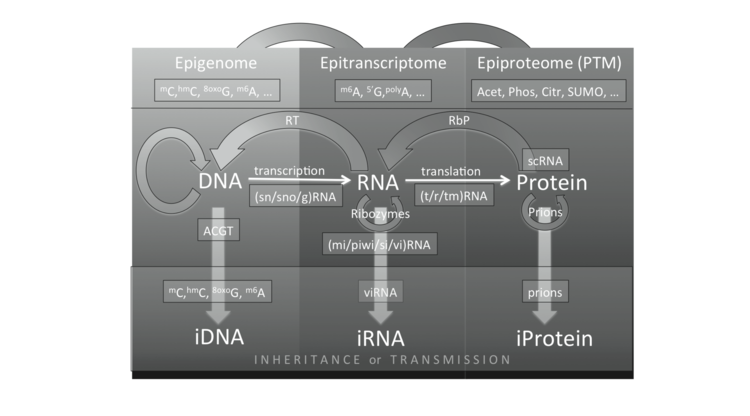 Paul Zumbo and Christopher E. Mason, Genome analysis: current procedures and applications, Chapter Molecular methods for profiling the RNA world, 2013.