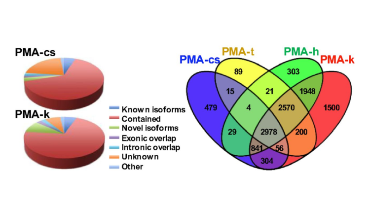 "Xinghua Pan et al., ""Two methods for full-length RNA sequencing for low quantities of cells and single cells,"" Proceedings of the national academy of sciences of the united states of america, vol. 110, iss. 2, pp. 594-599, Jan 2013."