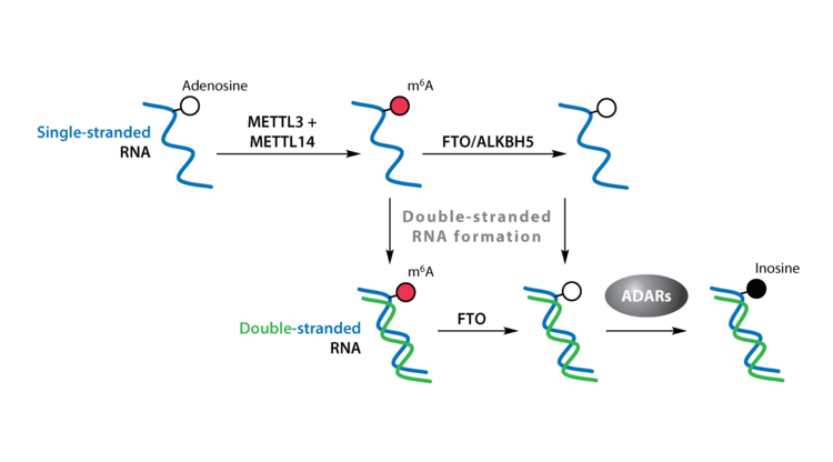 The pivotal regulatory landscape of RNA modifications